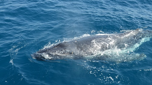 Punta Cana Whale Watching | © eGuide Travel